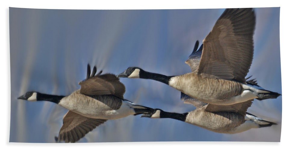 Birds Beach Towel featuring the photograph The Geese by Ernie Echols