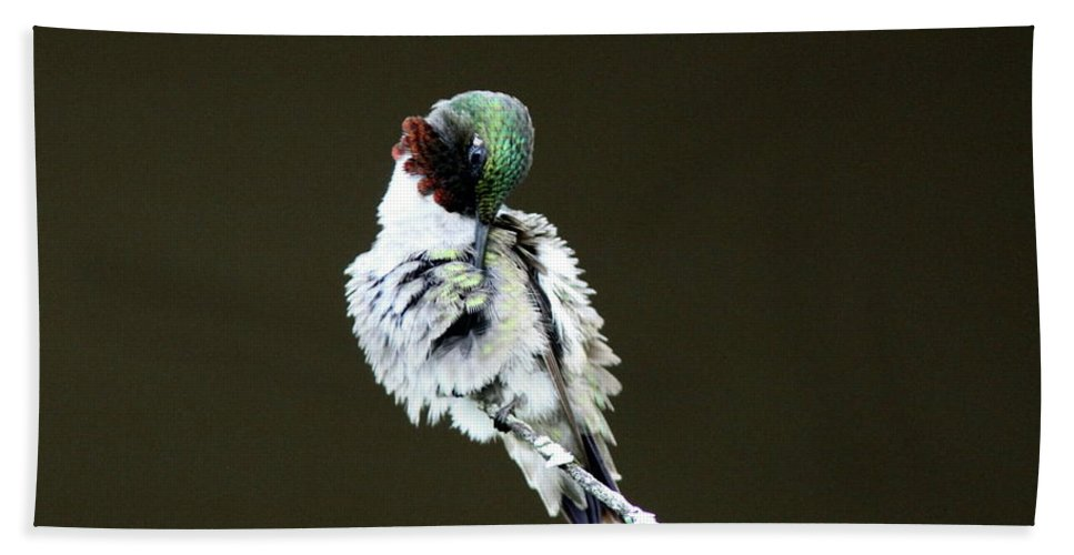 Hummingbird Beach Towel featuring the photograph The Hummer Image by Travis Truelove