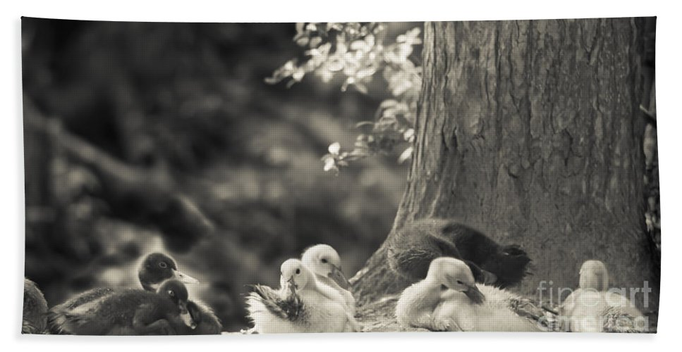 Ducks Beach Towel featuring the mixed media The Little Ones Rest by Kim Henderson