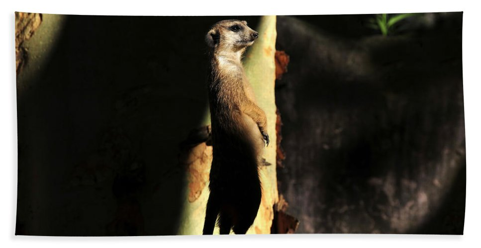 Wildlife Photography Beach Towel featuring the photograph The Meerkats Perch by David Lee Thompson