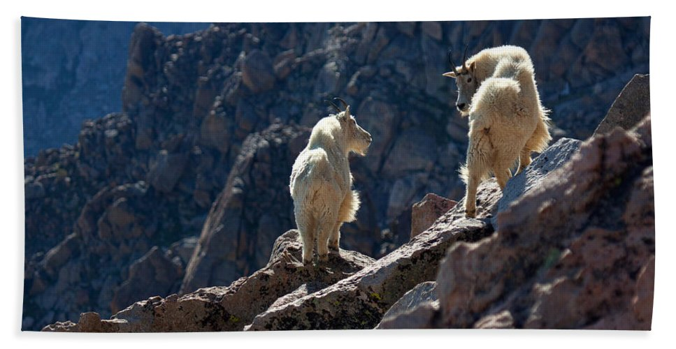 Mountain Goats; Posing; Group Photo; Baby Goat; Nature; Colorado; Crowd; Nature; Beach Towel featuring the photograph The Mountaineers by Jim Garrison