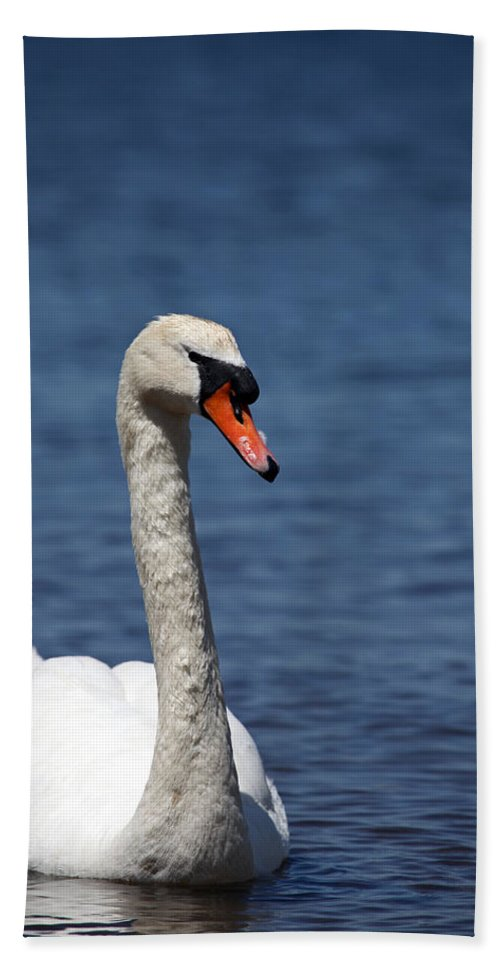 Swan Beach Towel featuring the photograph The Mute Swan by Karol Livote