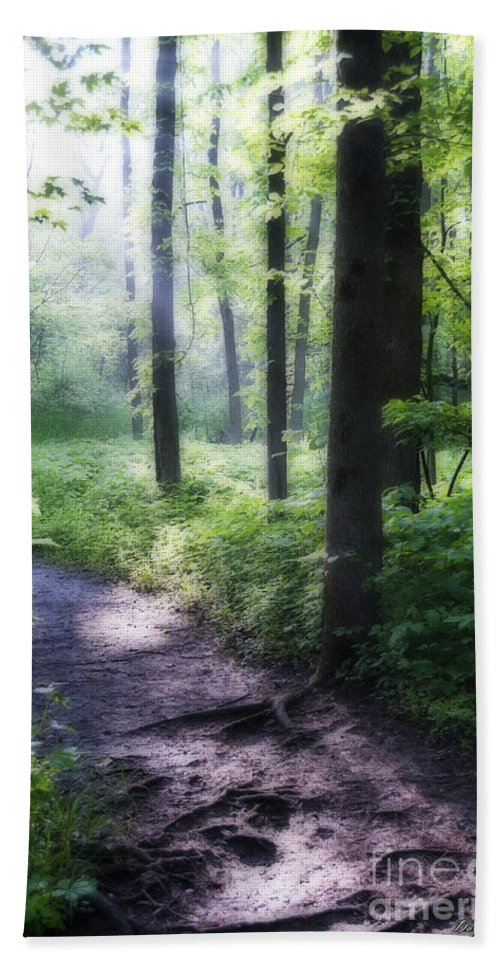 Path Beach Towel featuring the photograph The Path by David Arment