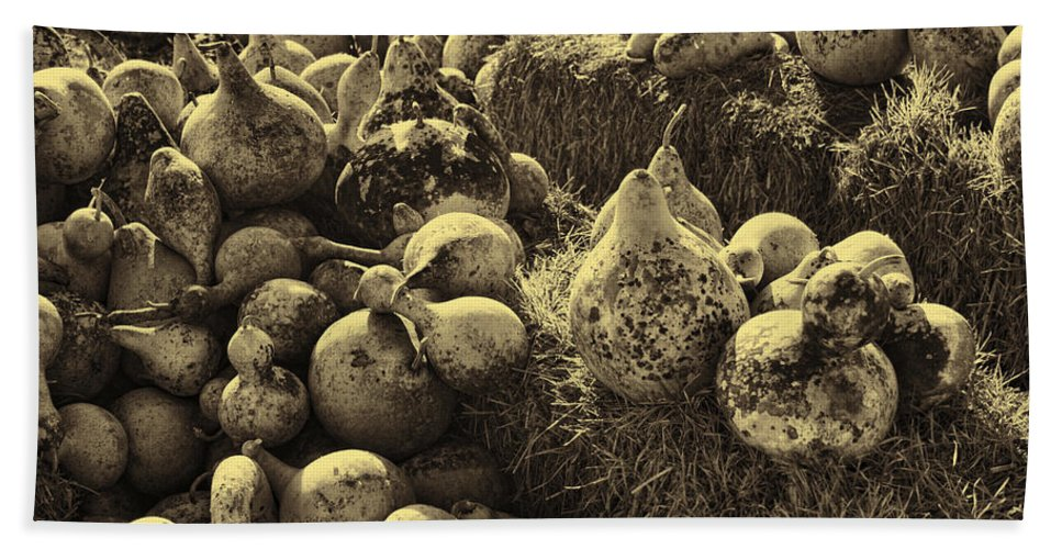 Pumpkins Beach Towel featuring the photograph The Produce Of The Earth In Sepia by Kathy Clark