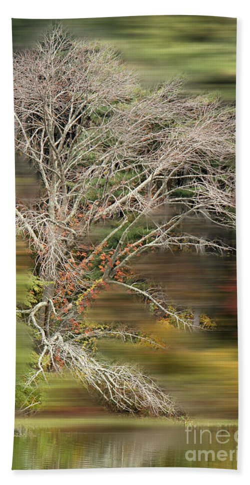 Running Beach Towel featuring the photograph The Running Tree by Mike Nellums