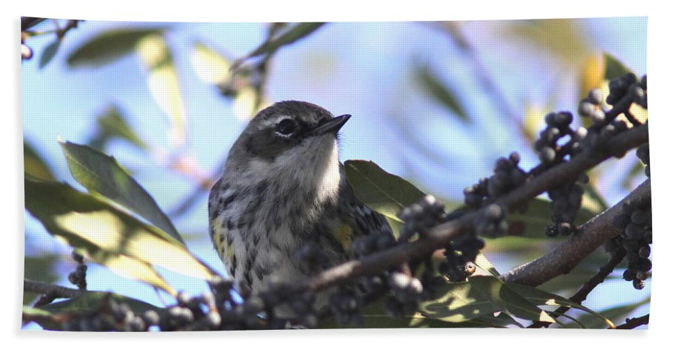 Pine Warbler Beach Towel featuring the photograph The Shy Guy by Travis Truelove