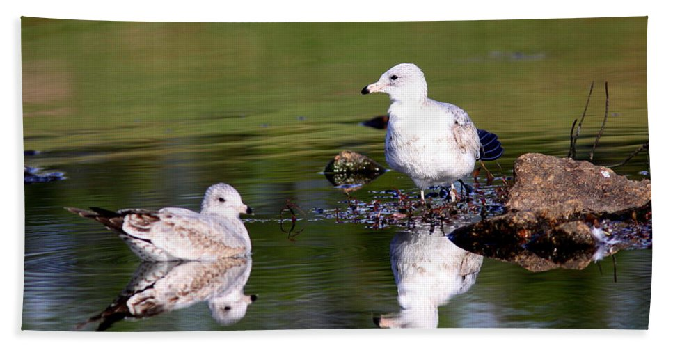 Gulls Beach Towel featuring the photograph The Water's Fine by Travis Truelove