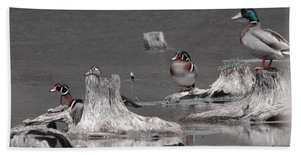 Wood Duck Beach Towel featuring the photograph The Wood by September Stone
