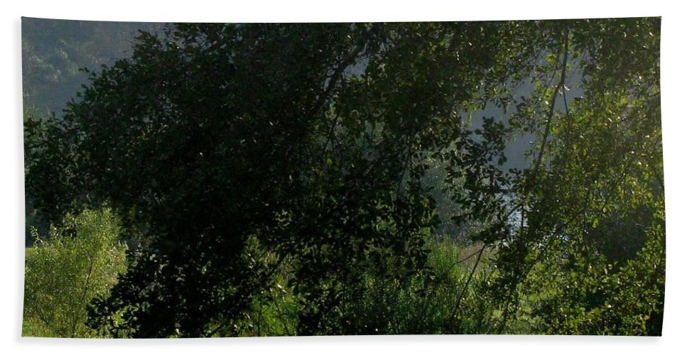 Greens Beach Towel featuring the photograph This Ole Tree by Maria Urso