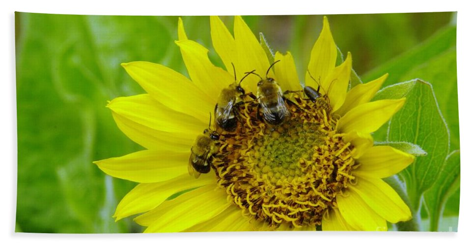 Bees Beach Towel featuring the photograph Three Bees Hunkering Down by Jeff Swan