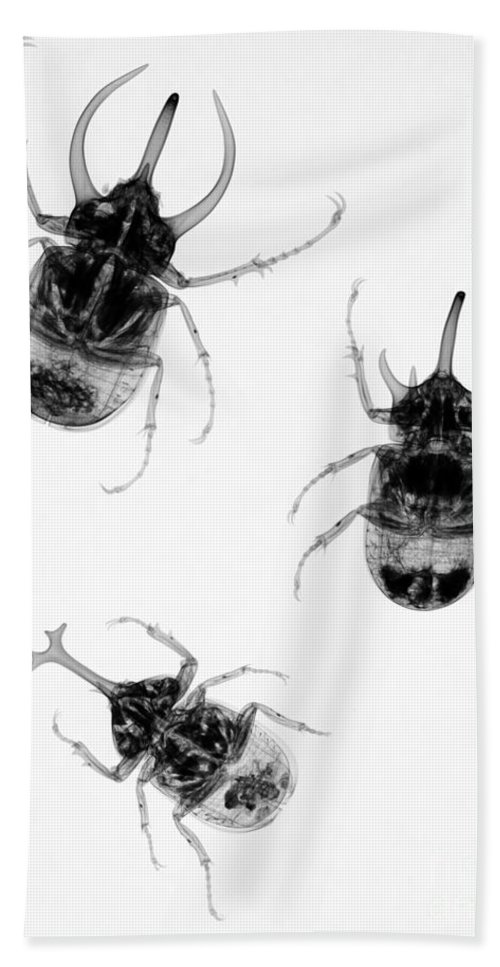 Beetles Beach Towel featuring the photograph Three Beetles X-ray by Ted Kinsman