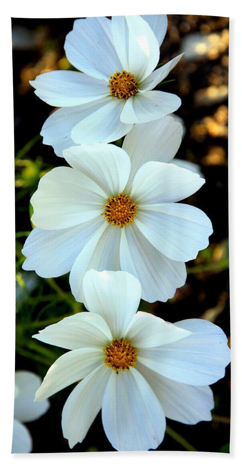 Flowers Beach Towel featuring the photograph Three White Flowers by Steve McKinzie