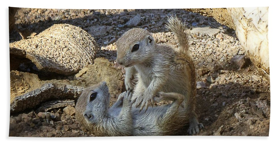 Oundtail Ground Squirrels Beach Towel featuring the photograph Tickle Me by Saija Lehtonen