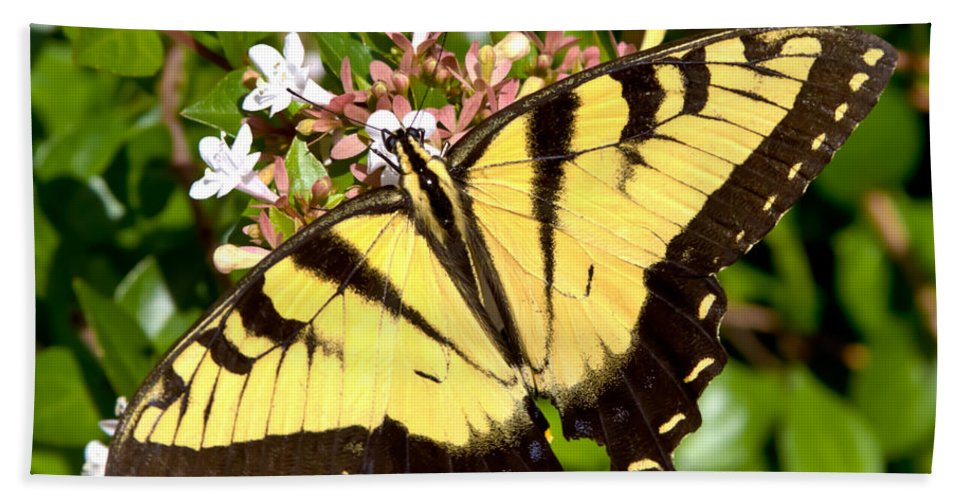 Butterfly Beach Towel featuring the photograph Tiger Swallowtail by Lynne Jenkins