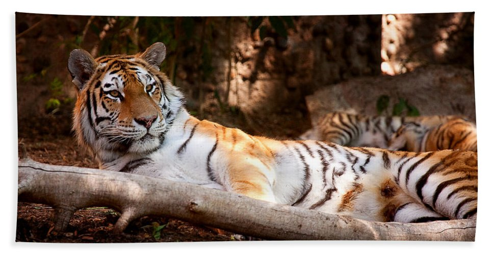 Tigress Photograph Beach Towel featuring the photograph Tigress And Cubs by Jim Garrison