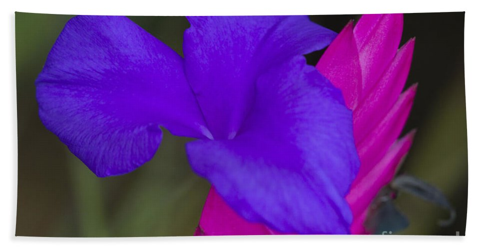 Heiko Beach Towel featuring the photograph Tillandsia Cyanea by Heiko Koehrer-Wagner
