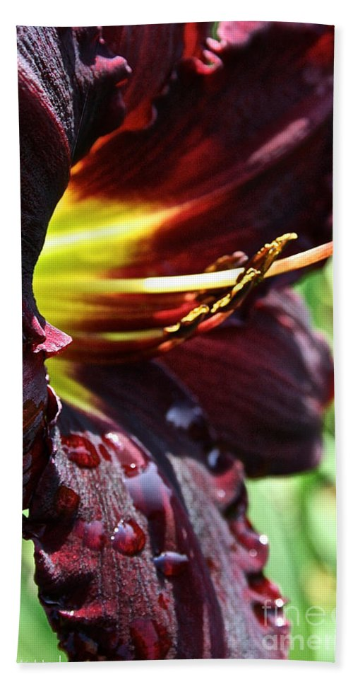 Plant Beach Towel featuring the photograph Timber Creek Ace by Susan Herber