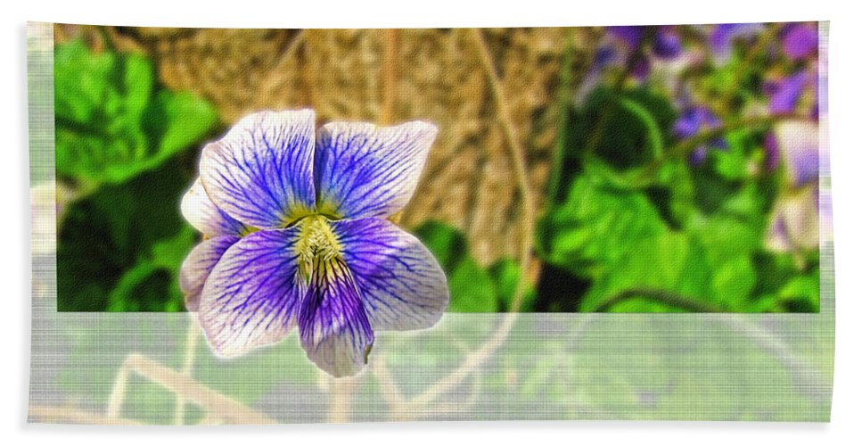 Greeting Card Beach Towel featuring the photograph Tiny Violet  Blank Greeting Card by Debbie Portwood