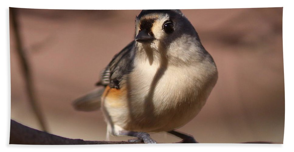 Tufted Titmouse Beach Towel featuring the photograph Titmouse - Split By Shadows by Travis Truelove