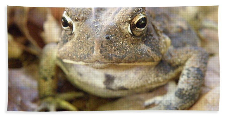Toad Beach Towel featuring the photograph Toad by Lainie Wrightson