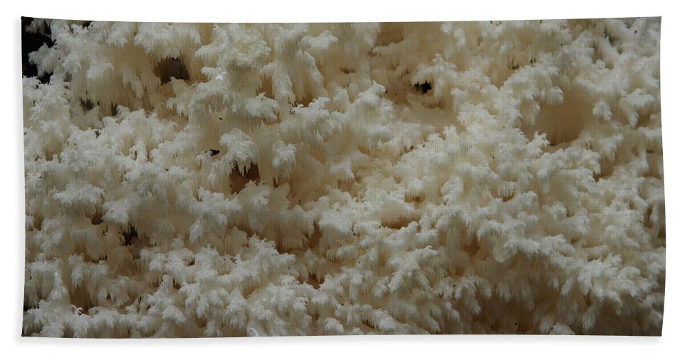 Hericium Coralloides Beach Towel featuring the photograph Tooth Fungus by Daniel Reed