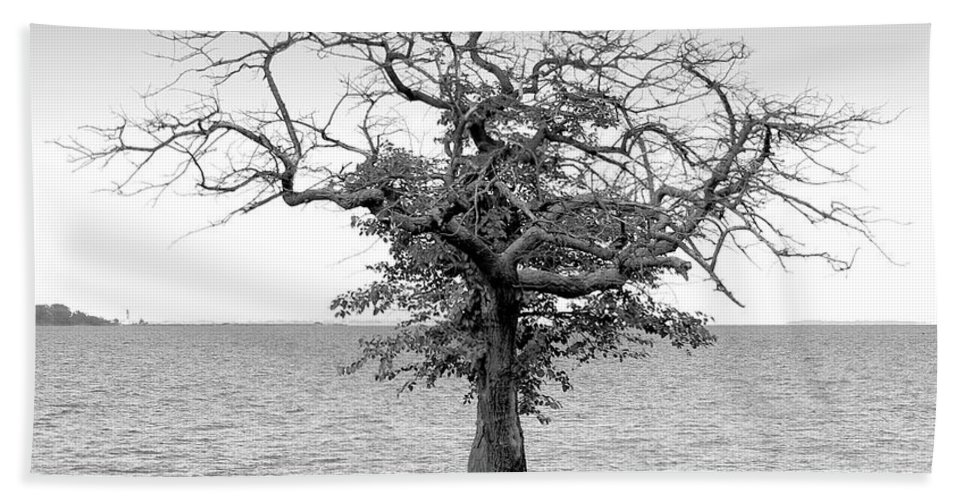 2d Beach Towel featuring the photograph Tree And Water by Brian Wallace
