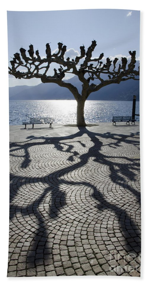 Tree Beach Towel featuring the photograph Tree With Shadow by Mats Silvan