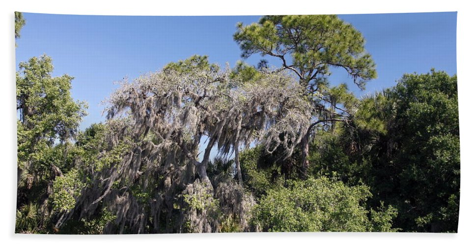 Trees Beach Towel featuring the photograph Trees Decorated With Moss by Sally Weigand