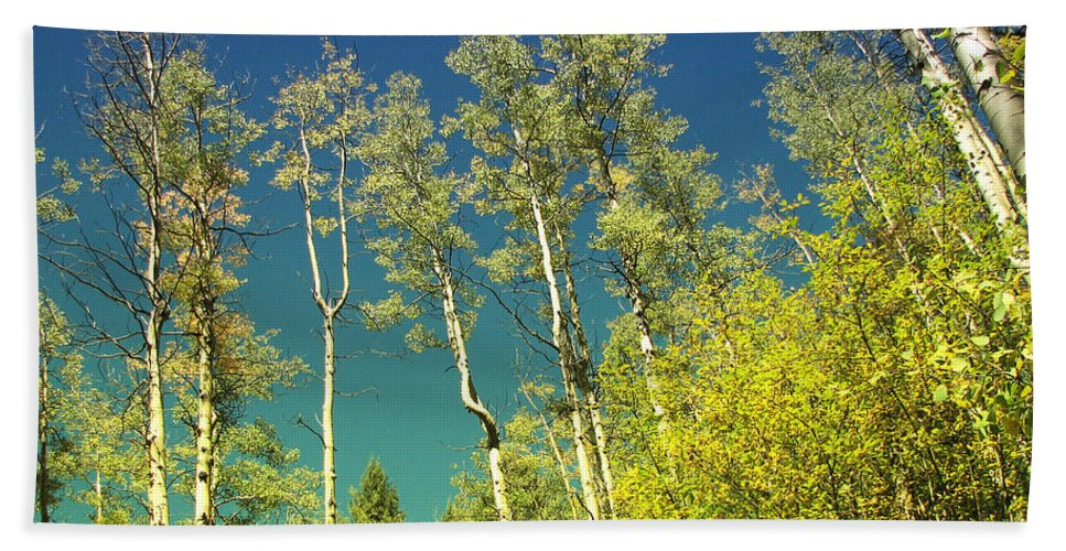 Trees Beach Towel featuring the photograph Treetop Color by Kathleen Grace