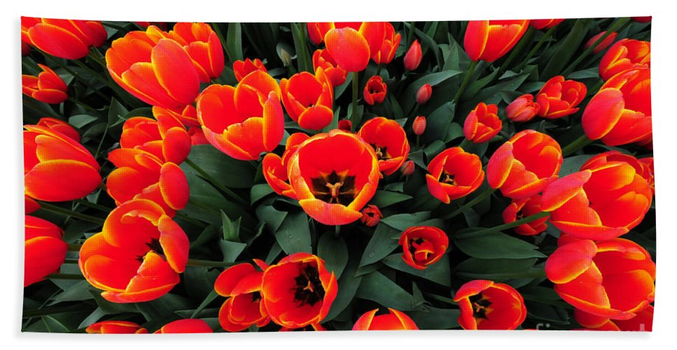 Tulip Beach Towel featuring the photograph Tulip Field by Paul Ward