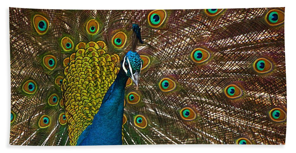 Peacock Beach Towel featuring the photograph Turquoise And Gold Wonder by Byron Varvarigos