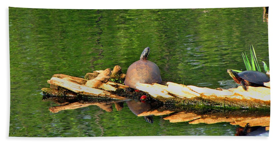 Turtle Photographs Beach Towel featuring the photograph Turtle Sunbathing by Ms Judi