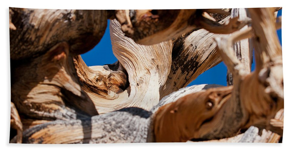 Ancient Beach Towel featuring the photograph Twisted Bristlecone Pine by Olivier Steiner