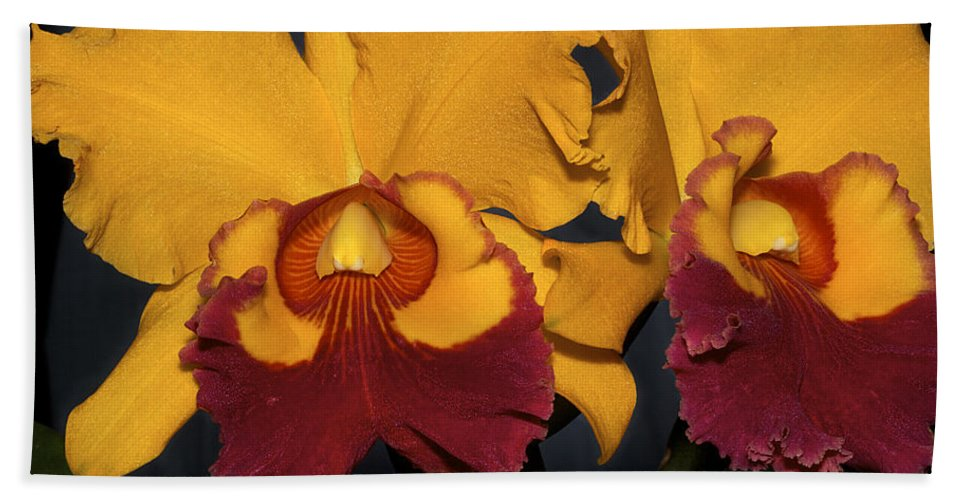 Orchids Yellow Beach Towel featuring the photograph Two Yellow And Red Orchids by Phyllis Denton