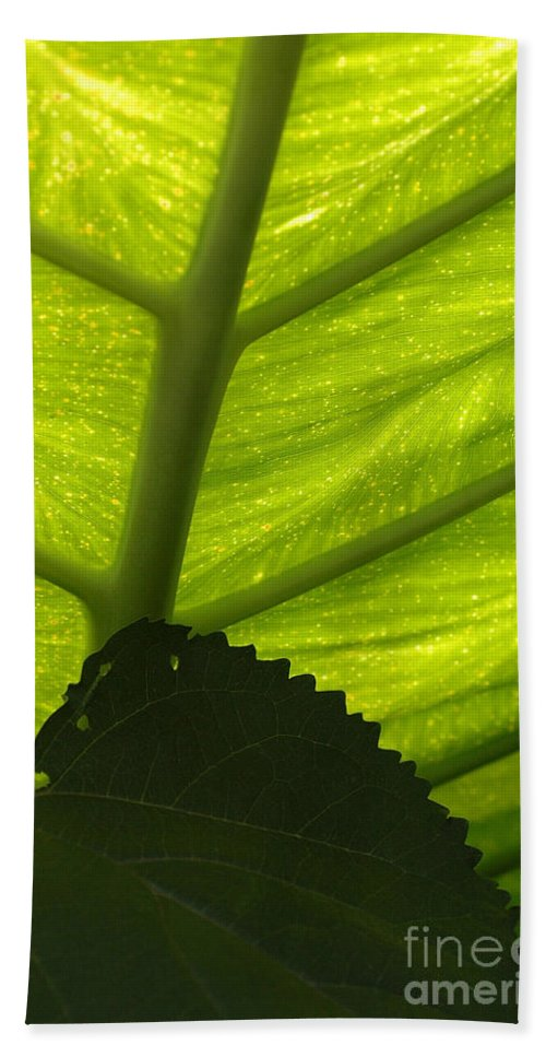 Underneath Beach Towel featuring the photograph Underneath The Banana Plant Leaf by Mike Nellums