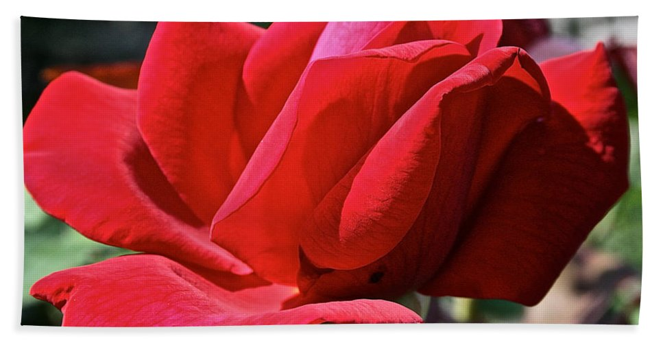 Outdoors Beach Towel featuring the photograph Unrolling The Red Carpet by Susan Herber