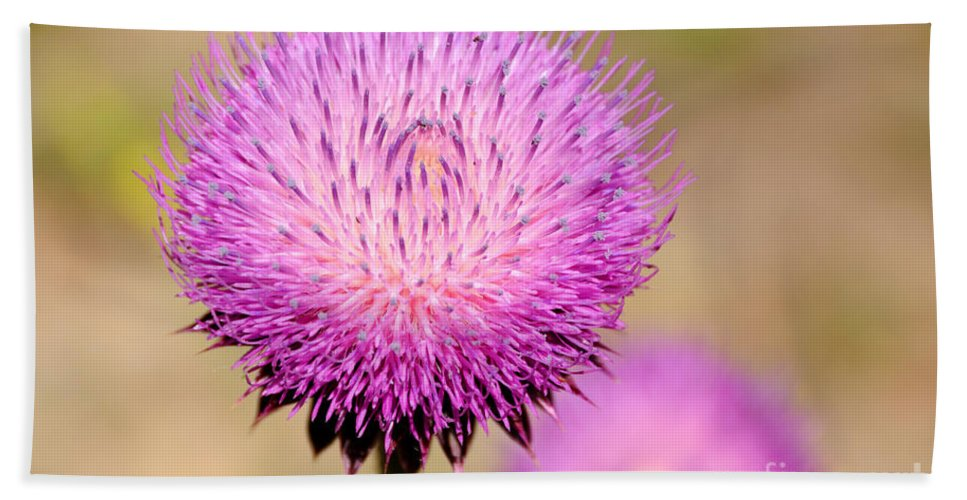 Flower Beach Towel featuring the photograph Utah Thistle Flower by Gary Whitton