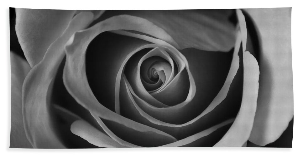 Close Up Beach Towel featuring the photograph Valentine Rose - Bw by Sean Wray