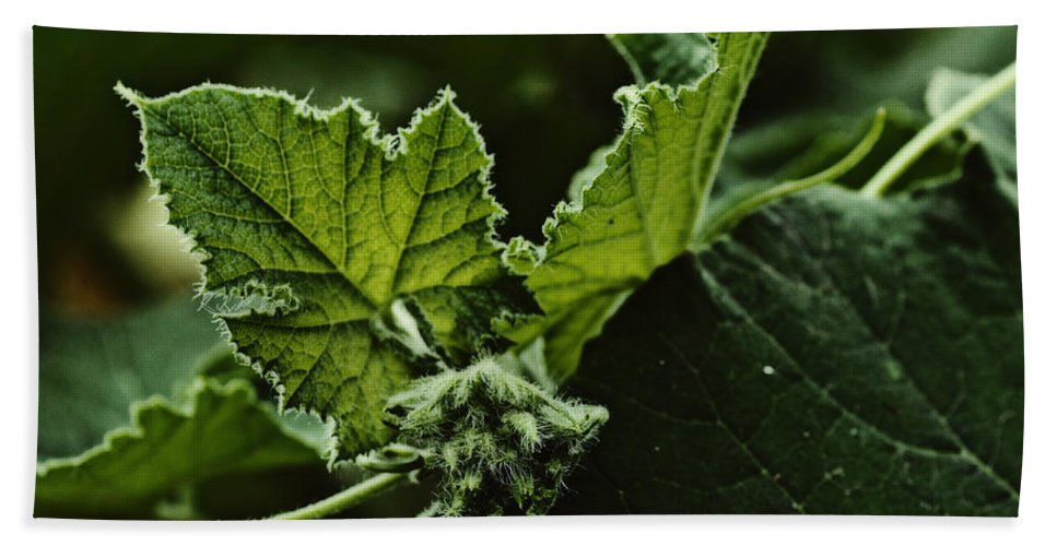 Dragon Beach Towel featuring the photograph Vegetative Dragon by Susan Capuano