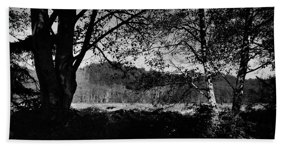 Landscape Beach Towel featuring the photograph View Through The Trees by Kathleen Grace