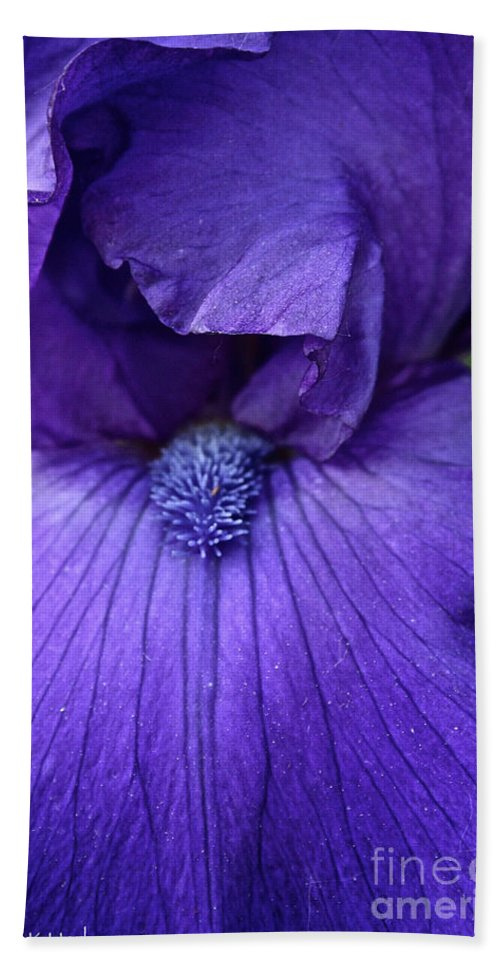 Plant Beach Towel featuring the photograph Vision In Violet by Susan Herber