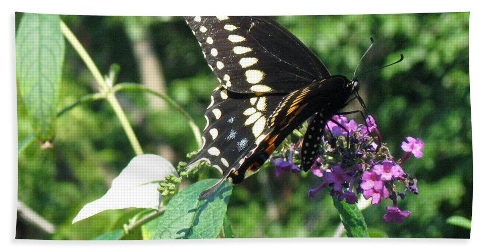 Black Swallowtail Butterfly Beach Towel featuring the photograph Visit From A Black Swallowtail by Nancy Patterson