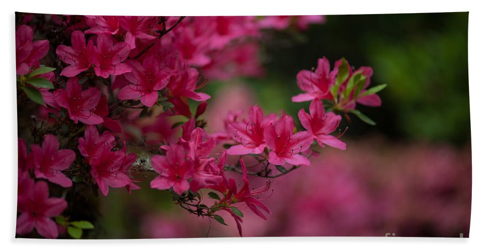 Rhodies Beach Towel featuring the photograph Vivid Group by Mike Reid