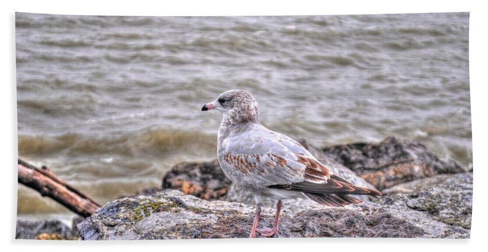 Beach Towel featuring the photograph Waiting Gull by Michael Frank Jr
