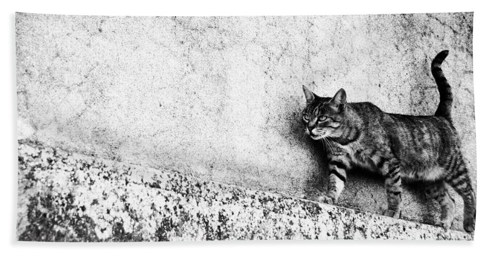 Cat Beach Towel featuring the photograph Walking On The Wall by Laura Melis