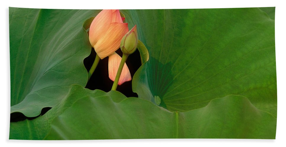 Floral Beach Towel featuring the photograph Water Lily by Mark Greenberg
