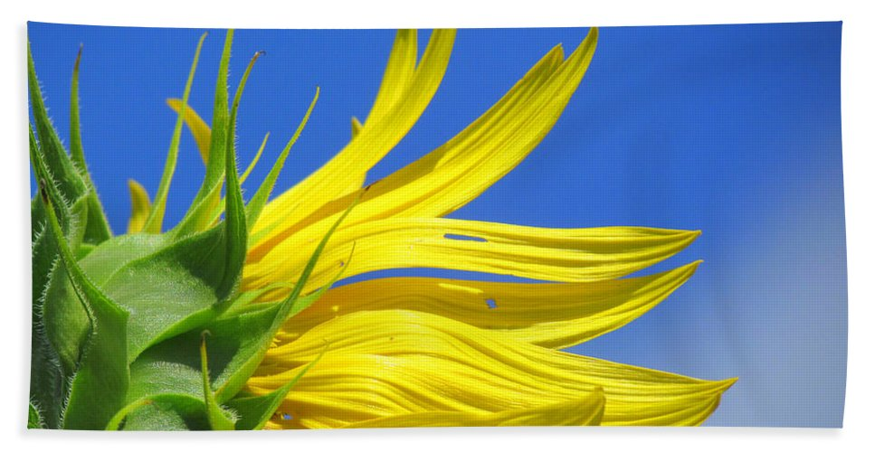 Sunflowers Beach Towel featuring the photograph Waving Goodbye To Summer by Lori Pessin Lafargue