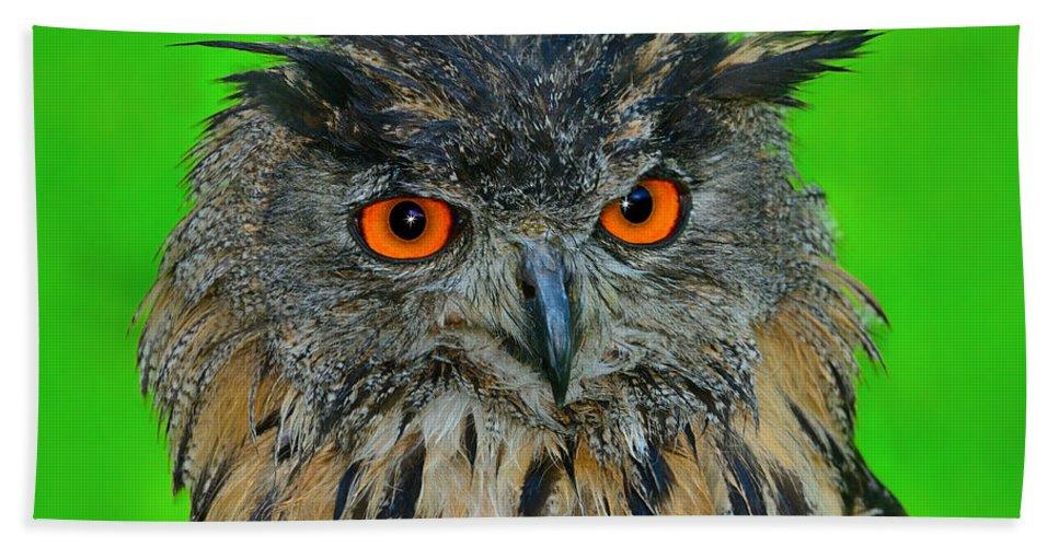 Eurasian Eagle-owl Beach Towel featuring the photograph Wet by Tony Beck