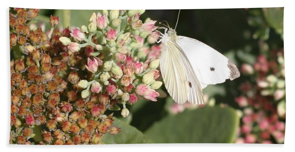 Butterfly Beach Towel featuring the photograph White Cabbage by Living Color Photography Lorraine Lynch