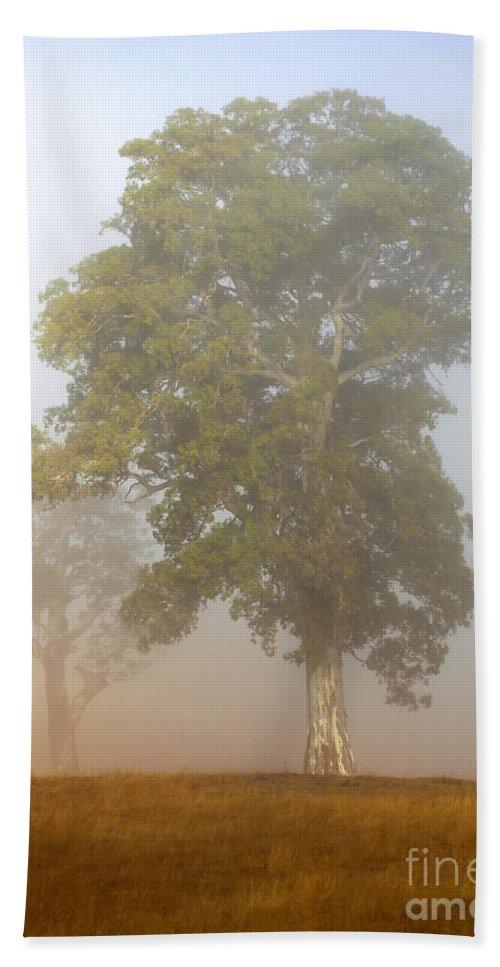 White Gum Tree Beach Towel featuring the photograph White Gum Dawn by Mike Dawson